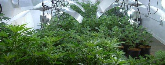About Medical Marijuana Consultants