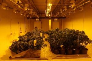 Marijuana Consultants Canada